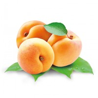 Turkish Dried Apricots - Usta Food Industry Agricultural
